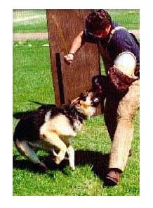 สุนัขที่มั่นใจมากขึ้นจะได้กัด เมื่อเห่าได้ดีพอ