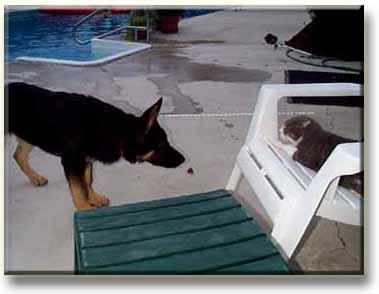 ลูกสุนัขถอยหลัง หยุดชะงักดูเหตุการณ์